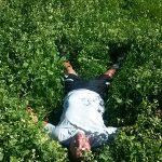 Eduards Jakobsweg auf grüner Wiese