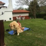 Spanien Jakobsweg Herberge Gueemes Kult Hund